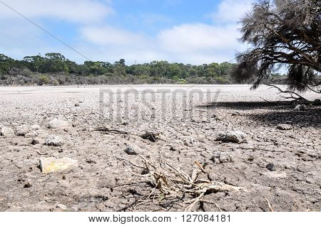 Drought at Manning Lake with a dry cracked bed surrounded by wetland tree landscape in Hamilton Hill, Western Australia.