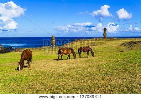Horses grazing at Ahu Tahai and Ahu Ko Te Riku in Tahat Archeological Complex Easter Island Chile