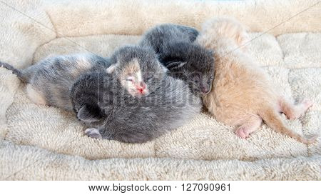four one week old kittens eyes still mostly closed laying together on a tan fuzzy bed looking down on kittens from front
