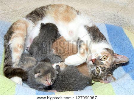 common kitten illnesses