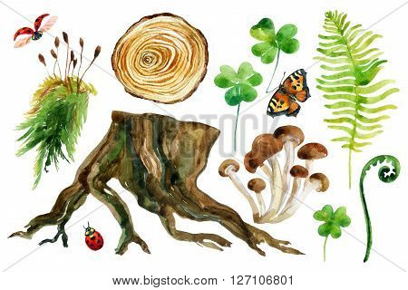Forest watercolor set isolated on white background. Woods stump mushroom leaves moss lady bug and butterfly. Watercolor colorful natural woods life. Hand painted forest wildlife illustration