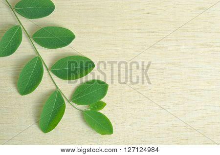 Moringa (Other names are Moringa oleifera Lam. MORINGACEAE Futaba kom hammer vegetable hum hum bug bug Hoo) leaves on wooden board background