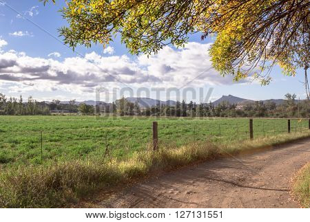 Photo of morning sun light on a South African farm road entrance with autumn tree branches overhanging
