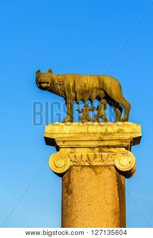 The Capitoline Wolf statue in Rome - Italy