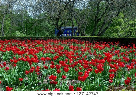 red flowers tulips trees bushes bee hive