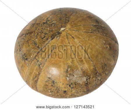 Fossilized sea urchin macro isolated on white background