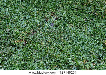 Backyard, Yard Work Planting A New Sod Grass In Garden