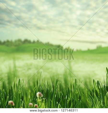 Beauty spring time. Abstract natural backgrounds for your design