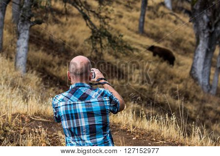 SEQUOIA NATIONAL PARK ,CALIFORNIA - SEPTEMBER 9, 2015: View of a tourist man taking photos of a bear in the Sequoia National Park on September 9 2015. Sequoia NP is a famous park with world biggest trees.