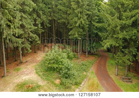 Footpath going through a forest
