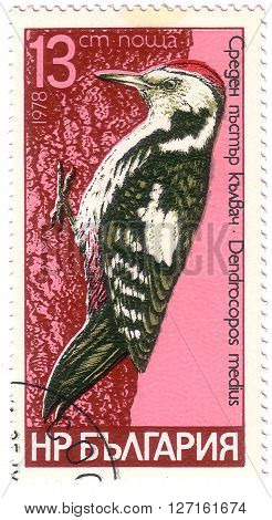 """Bulgaria- Circa 1978: A Stamp Printed In Bulgaria Shows Series Of Images""""bird Species Of Woodpeckers"""