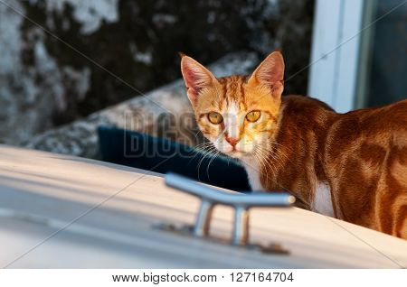 A shot of a ginger cat at the evening light