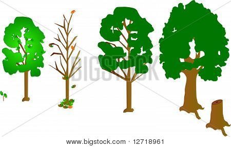 4 trees, a sapling and a dead trunk.. tree growth