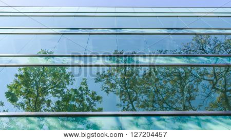 Glass window of office building reflecting opposite tree