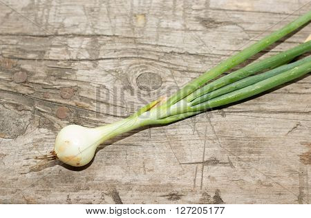Young Green Onions On A Wooden Bench, Freshly Picked