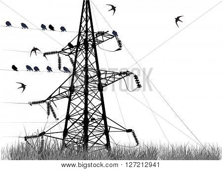 illustration with electric pylon with birds isolated on white background