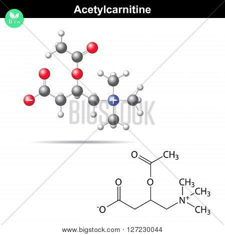 Acetylcarnitine biological molecule 2d and 3d vector model isolated on white background eps 8
