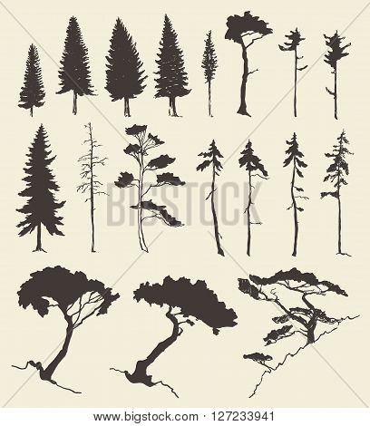 Hand drawn vector silhouette of pine and fir trees