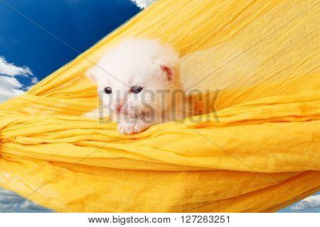 White kitten in a yellow hammock. Cute white kitten in a hammock having rest, at blue sky. Adorable pet. Small heartwarming kitten. Little cat. Animal isolated. High key