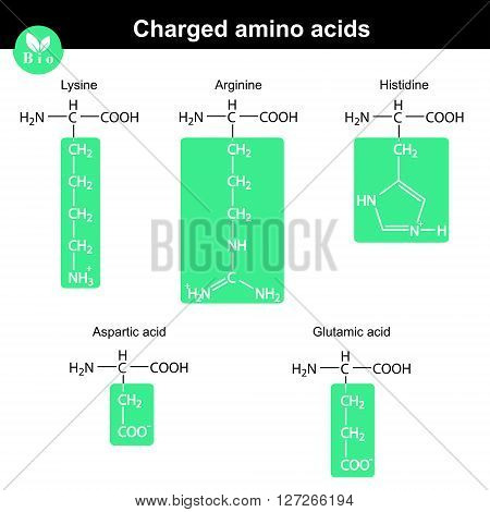 Set of charged amino acids with marked radicals - lysine arginine histidine aspartic acid glutamic acid molecular structures 2d vector eps 8