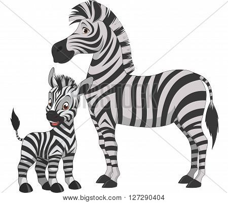 Vector illustration adult zebra and young zebra on a white background