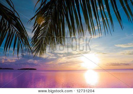 Sea Palm Beach