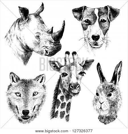 hand drawn vector animals set