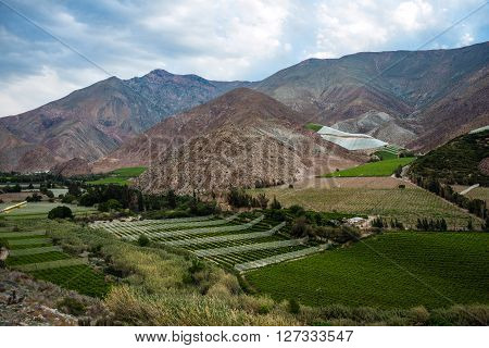Vineyards Of The Elqui Valley, Andes Part Of Atacama Desert In The Coquimbo Region, Chile