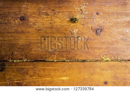 Wooden board from the hive with wax and propolis. Subject picture - bee products apiary
