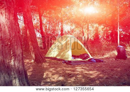 tent in the forest at the sunrice