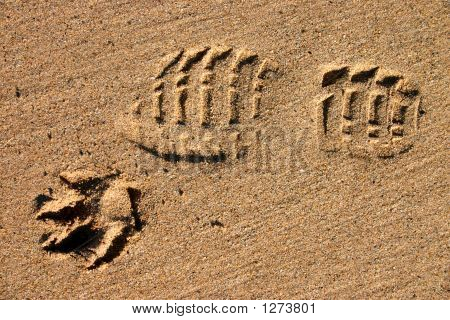 Man'S Best Friend.  A Footprint And A Dog'S Paw Print