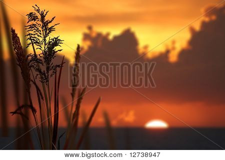 Reeds and Sunset