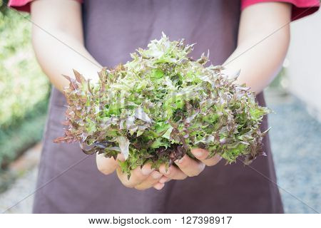 Hand on group of salad vegetable stock photo