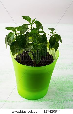 Young plants in plant pot vertical. Green leaf. Ecology concept. Green leaves. Green plant. Young plant. Growing plant. Baby plant. Plant pot. Green sprout