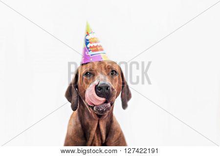 Dog Celebrating Birthday