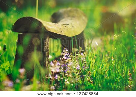 wooden old bench with green  background with branch and purple flowers and bright green grass,summer,vacation,relax,romantic,not focused rays,sun,spring,toned,garden nature