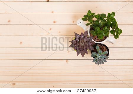 Succulents house plants in pots. Top View. poster