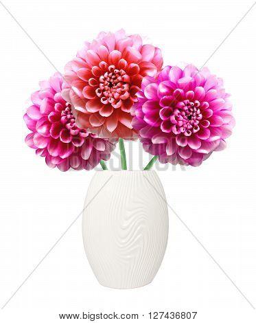 Pink Dahlia Autumn flowers on vase isolated on white background