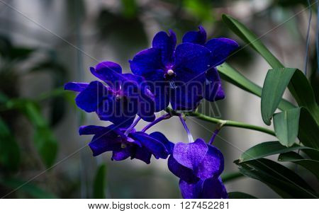 Perfect violette orchid flower in park botany