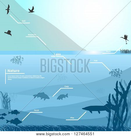 Vector illustration of nature on a blue background. Lake or river near the mountain. Birds and fish living in the lake. Underwater life. Infographics lake.
