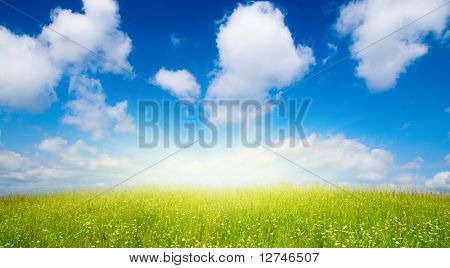 field of summer flowers and blue sky