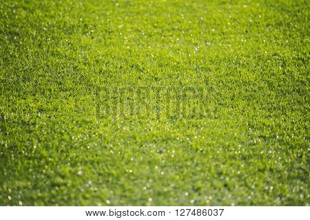 blurred Image Bokeh light Artificial green grass artificial turf background and texture