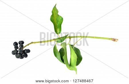 floral ellements with leaves from bouquet on the white background.