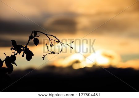 Silhouette of branch against of unfocused skyscape in twilight