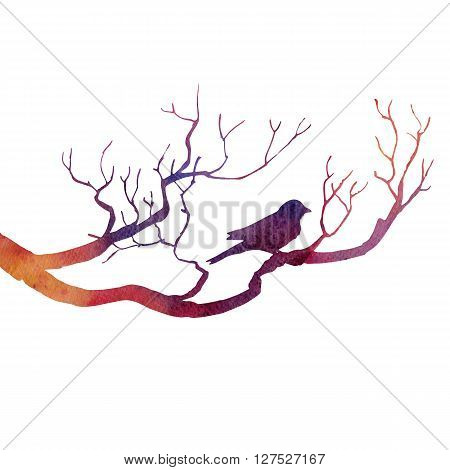 silhouette of bird at tree drawing by watercolor, hand drawn songbird at branch, hand drawn illustration
