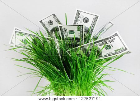 Money in grass. Many one hundred dollar bills in a pot with green grass on a gray background. Fake money. Business concept.