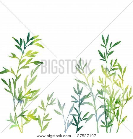 thicket of branches with leaves drawing in watercolor, green bamboo shoots, hand drawn artistic illustration