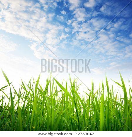 gras en bewolkte hemel