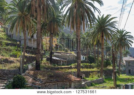 Hike in the Valle Gran Rey. Terraced fields and date palms is a typical landscape for the Valle Gran Rey, the beautiful canyon on the Canary island La Gomera. The terraces are still used for agriculture
