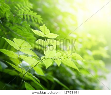 green leaves in deep forest